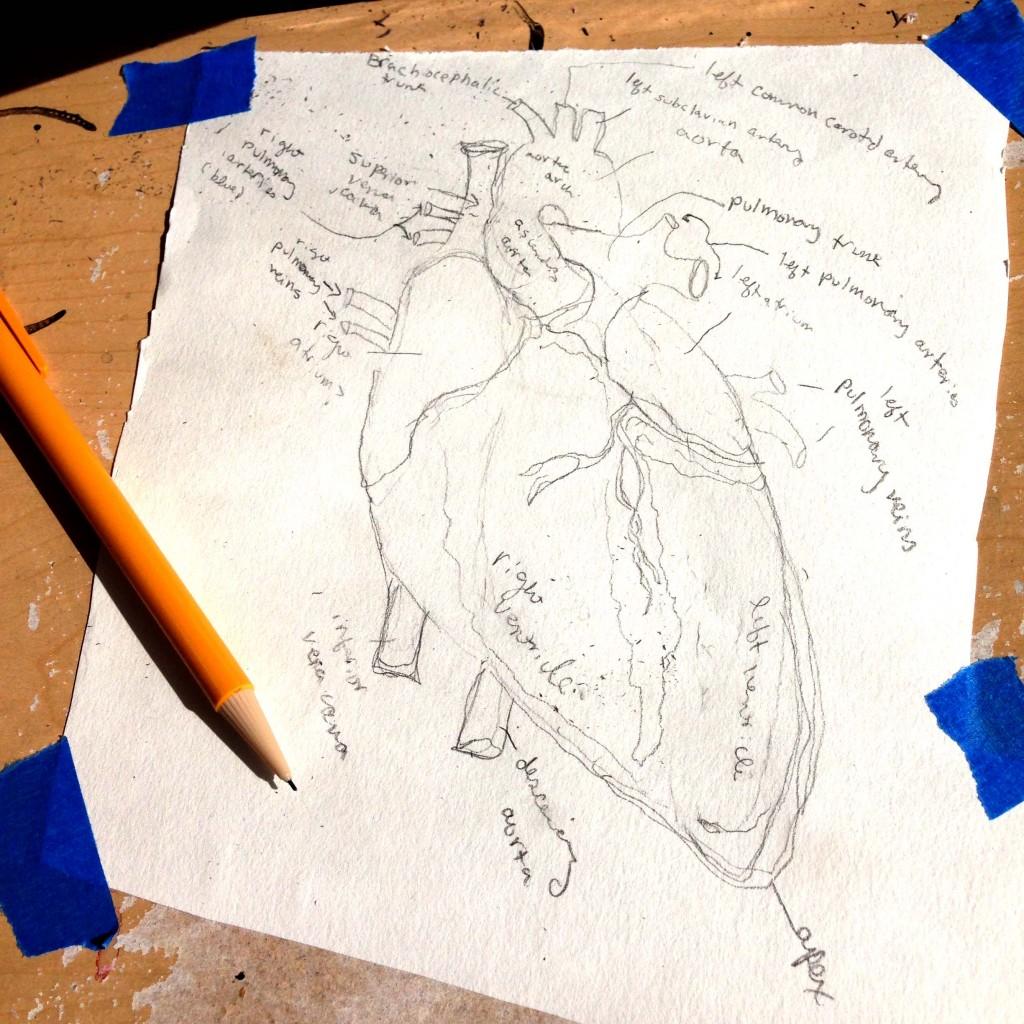 pencil sketch of heart
